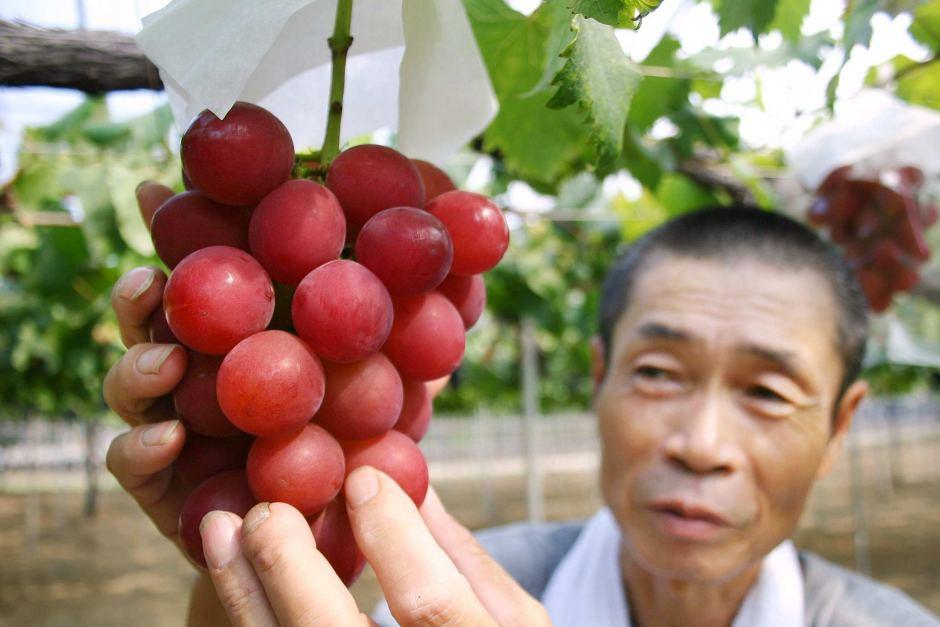 Гроздь японского винограда продали нааукционе за $9,8 тыс.