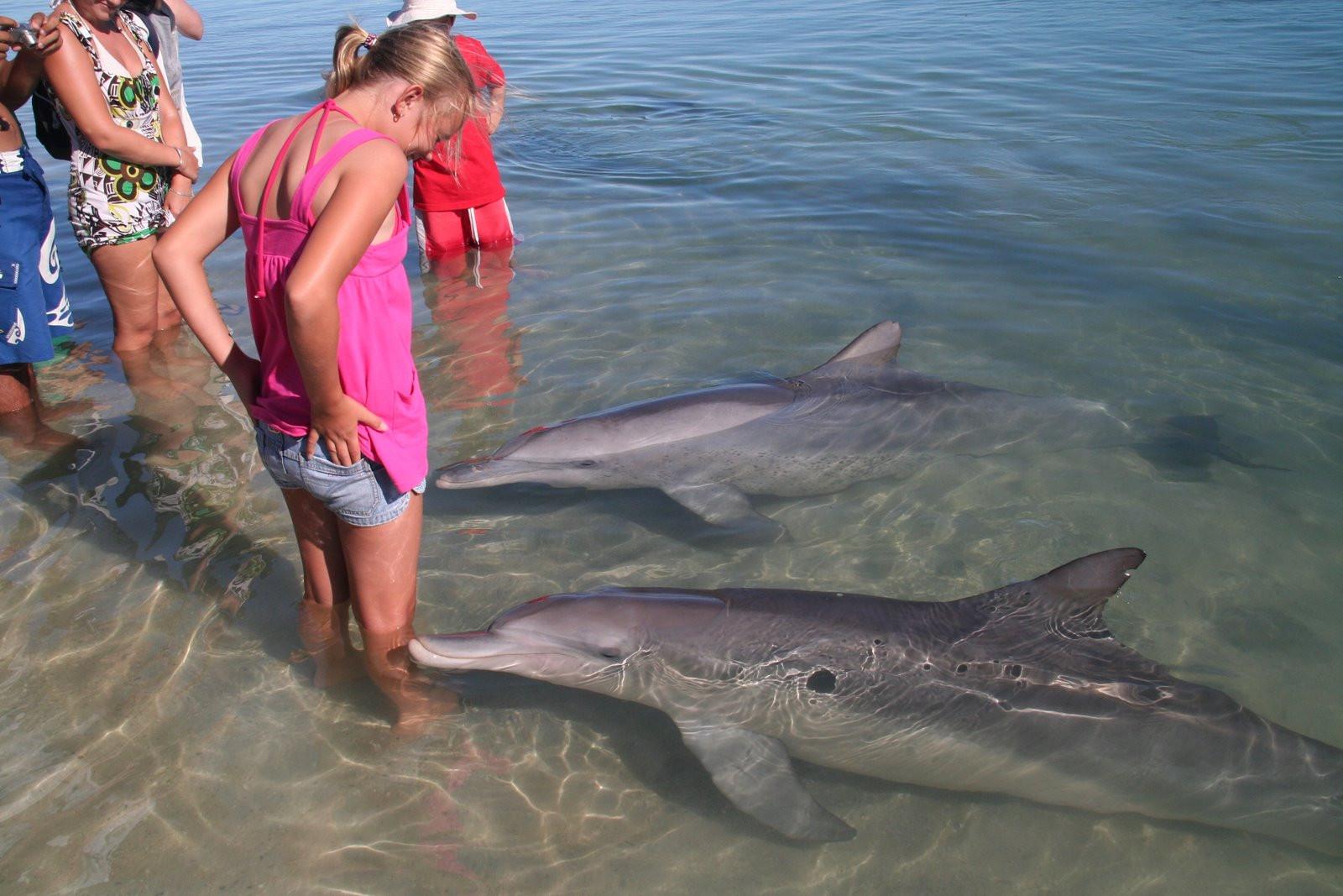 СМИ проинформировали о массовой смерти дельфинов вКрыму