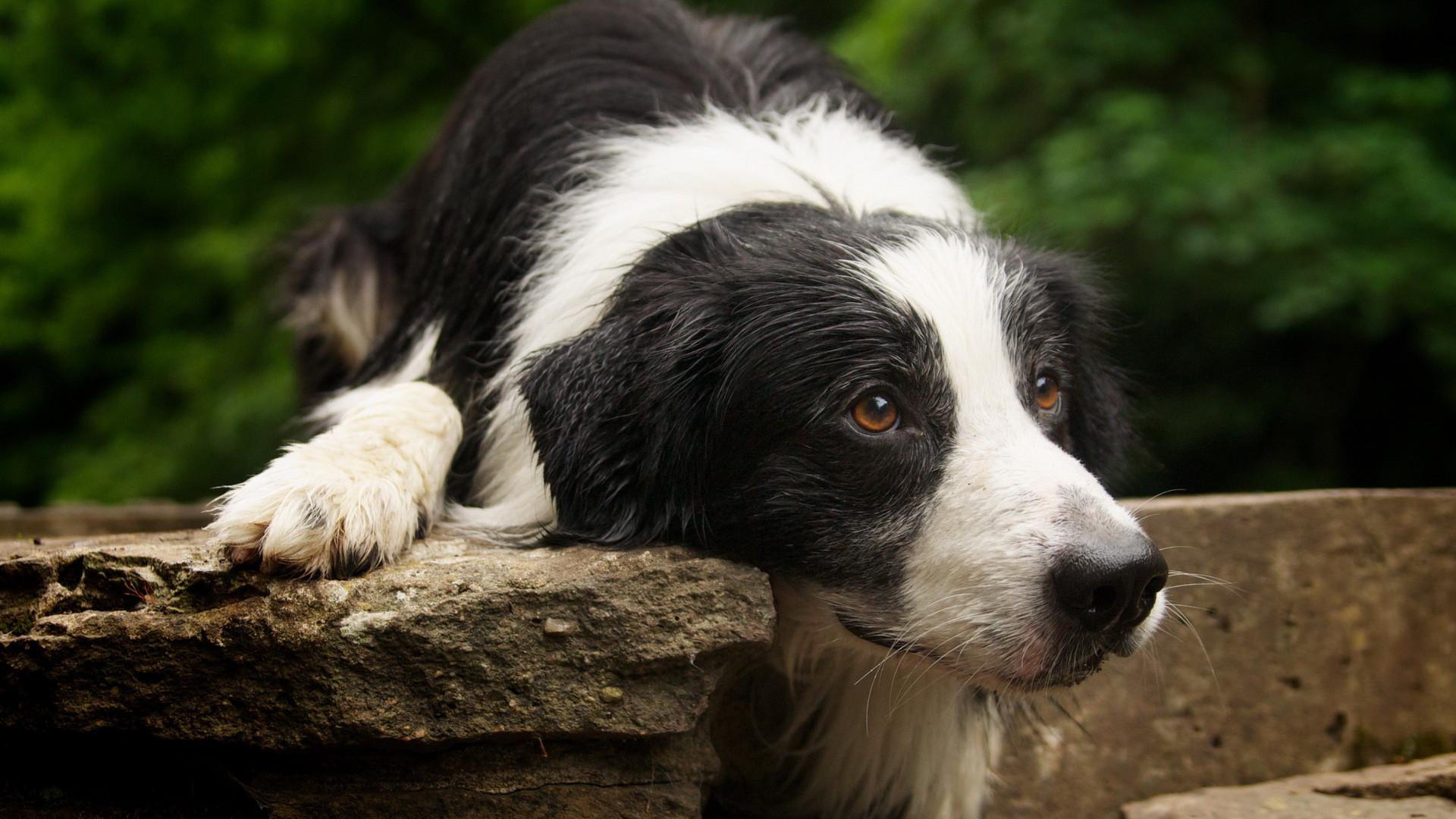 Омский пенсионер убил собаку трубой наглазах уеехозяина-подростка