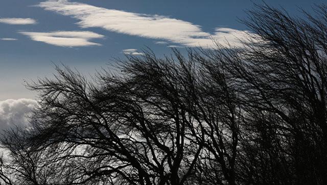 Шквалистый ветер, грозы иград ожидают граждан Алтая 14июля