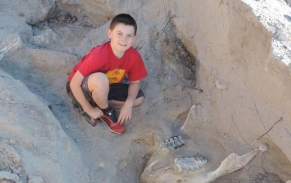 ВСША десятилетний парень отыскал череп предка слона возрастом 1 млн лет