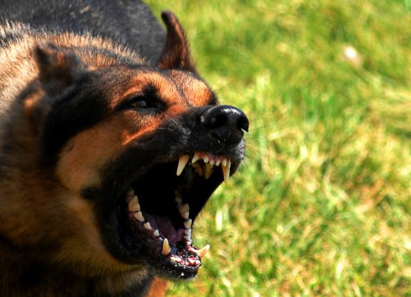 В Сестрорецке собака прокусила щеку двухлетнему мальчику