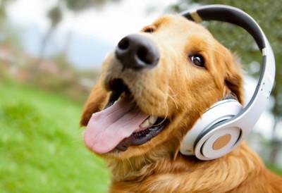 В Германии запустили первое собачье радио