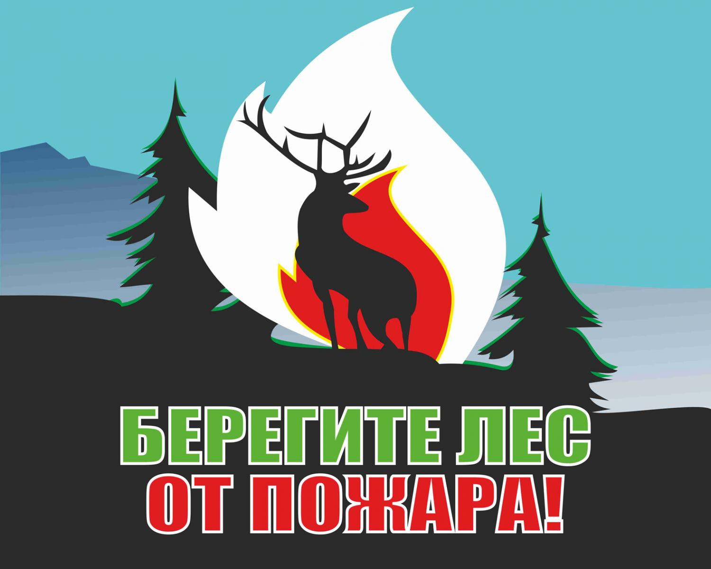 ВПетербурге создали приложение-оповещение олесных пожарах