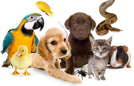 Ученые выяснили, сколько кошки и собаки съедают еды