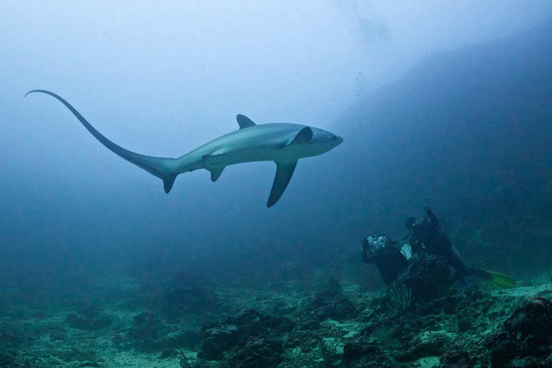 Туристы нарыбалке вТурции словили пятиметровую акулу
