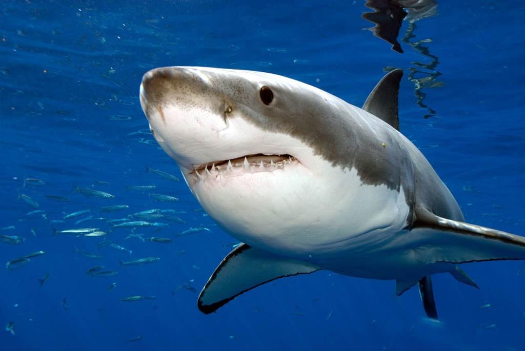 Русские дипломаты нерасполагают данными онападении акулы вХургаде