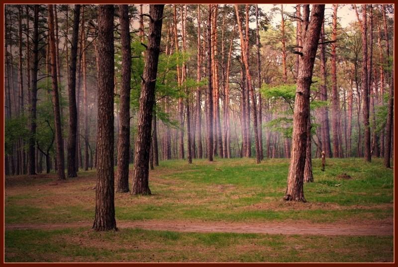 В РФ  вступил всилу закон о«лесной амнистии»
