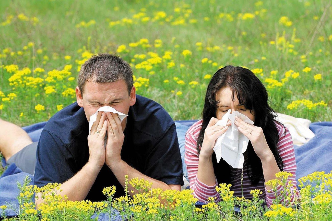 Google предупредит аллергиков осодержании пыльцы ввоздухе