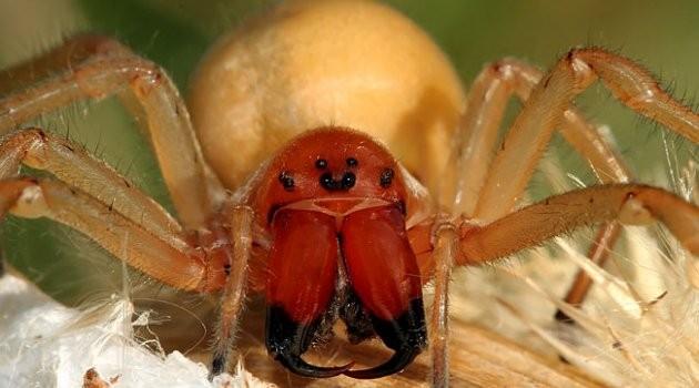Ядовитый паук найден впоселке наюге Челябинской области