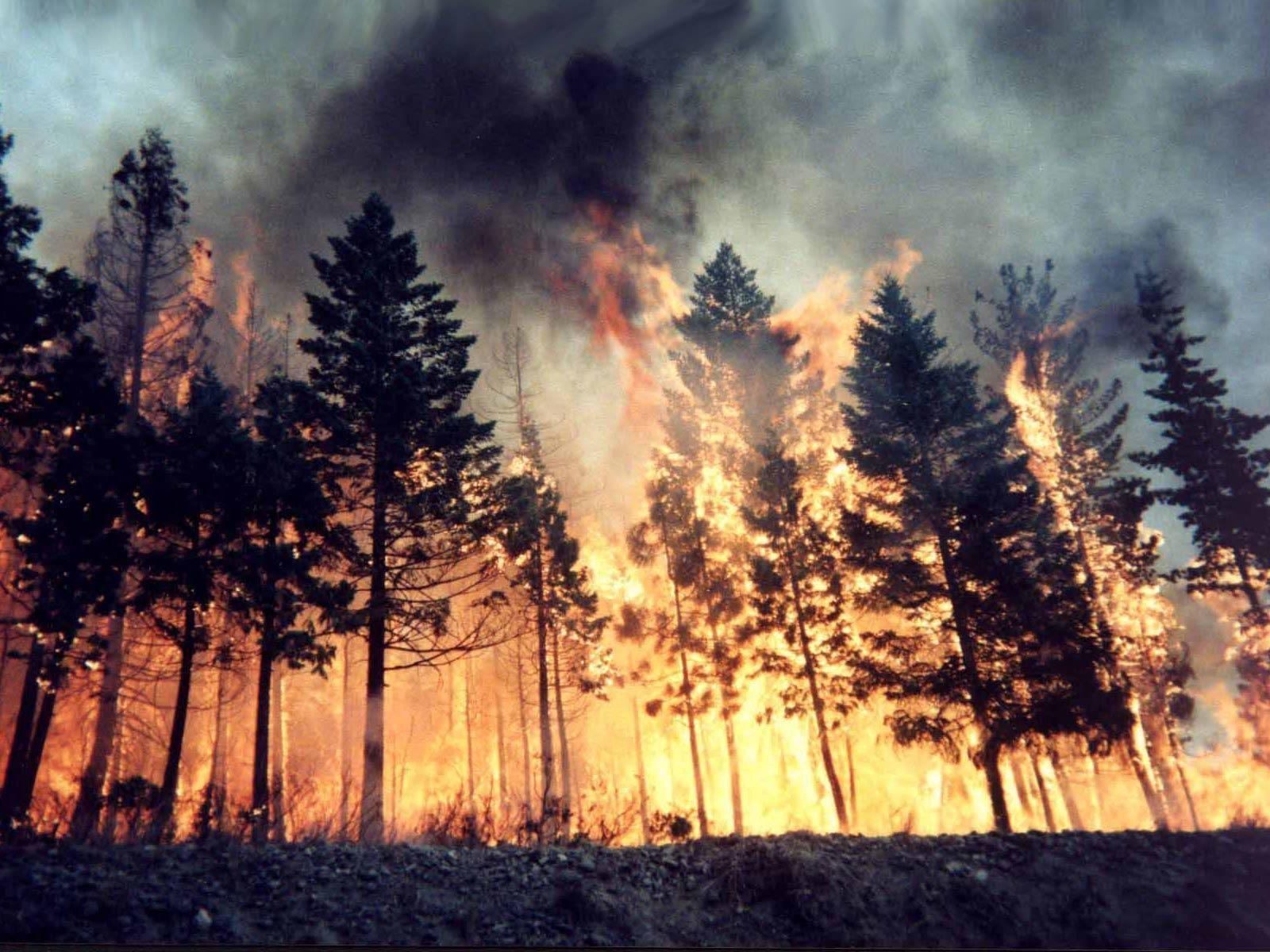 Вред отлесных пожаров в этом году составит приблизительно 9,5 млрд руб.