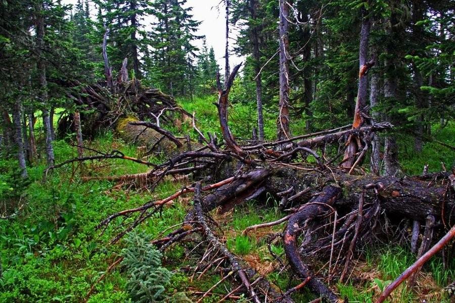 Вред отлесных пожаров составит приблизительно 9,5 млрд руб. в 2017-ом