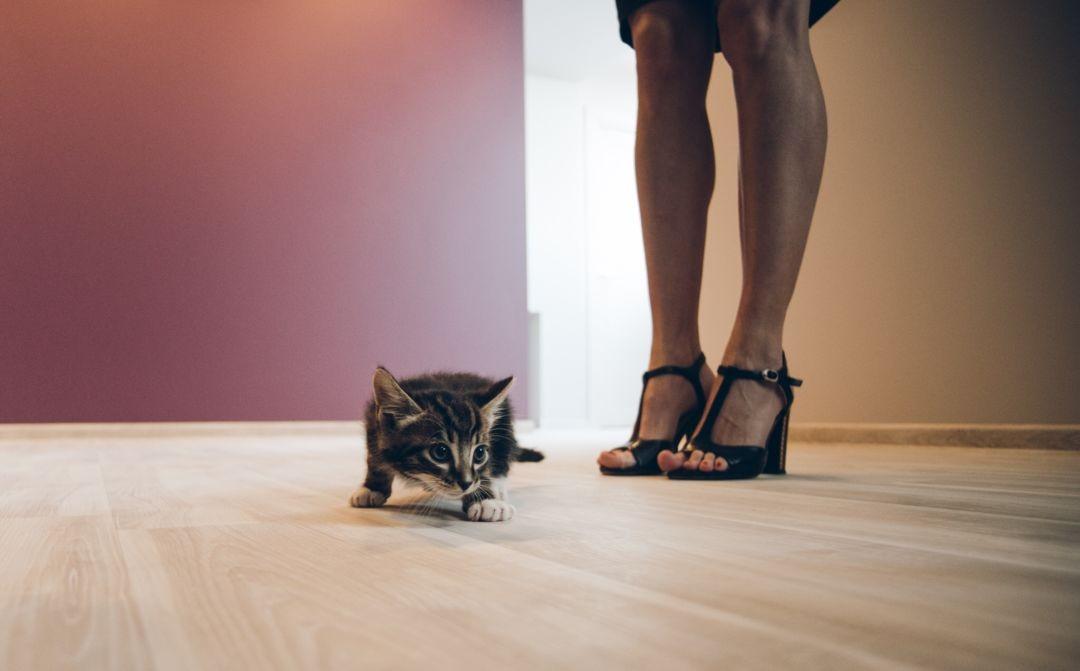 ВНижнем Новгороде открыли вакансию для кота с заработной платой