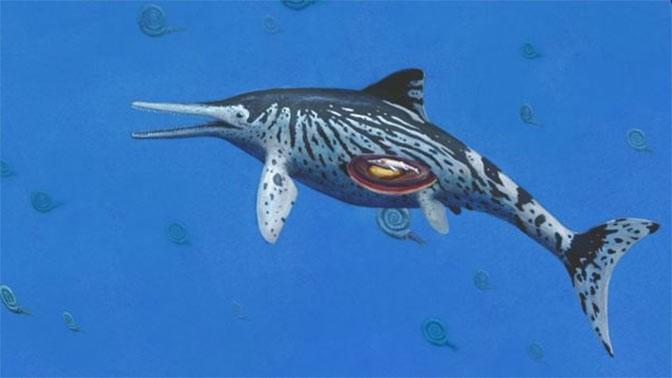 Крупнейший из отысканных ихтиозавров оказался беременной самкой
