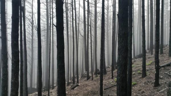 Минприроды РФ выступает за массовую рубку леса возле Байкала