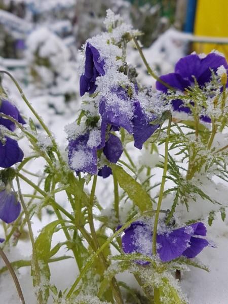 В Башкирии в августе выпал первый снег