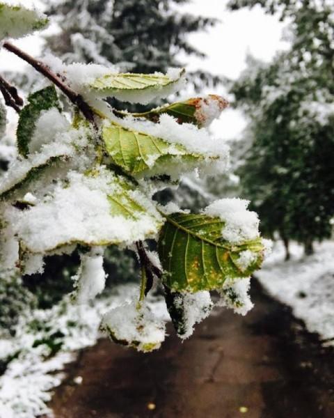 Летний снег в Приамурье лишил электричества 5 населенных пунктов