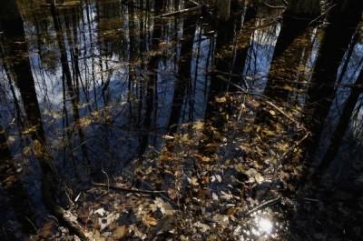 Озеро из фекалий образовалось в центре Архангельска