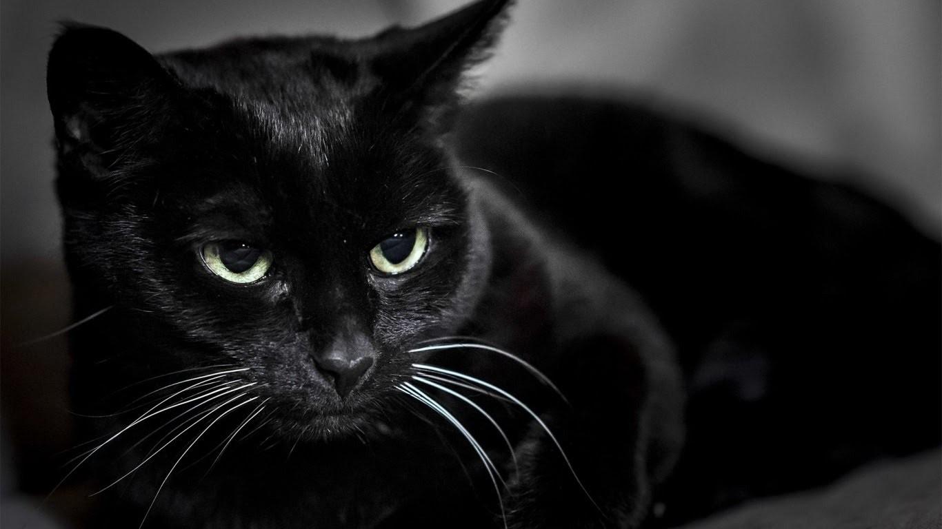 ВРостове-на-Дону черного кота выставили на реализацию за1 млн руб.