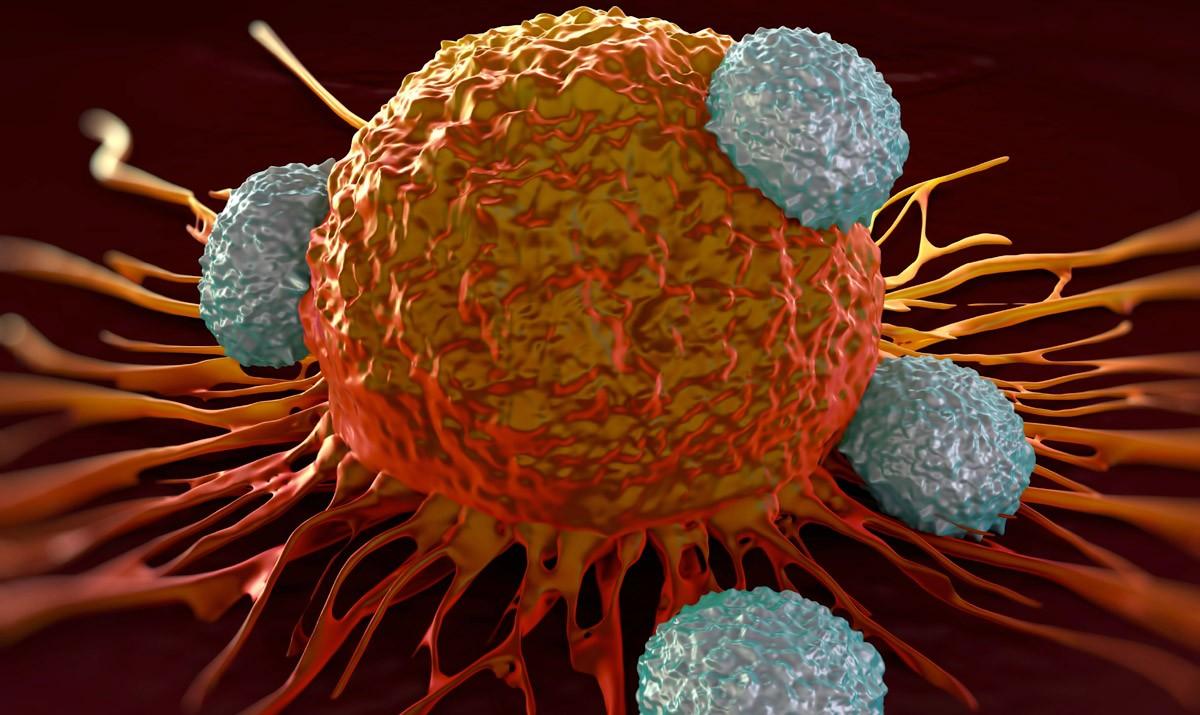 1504686619 t cell attack Русские химики представили сверхэффективный метод ранней диагностики рака