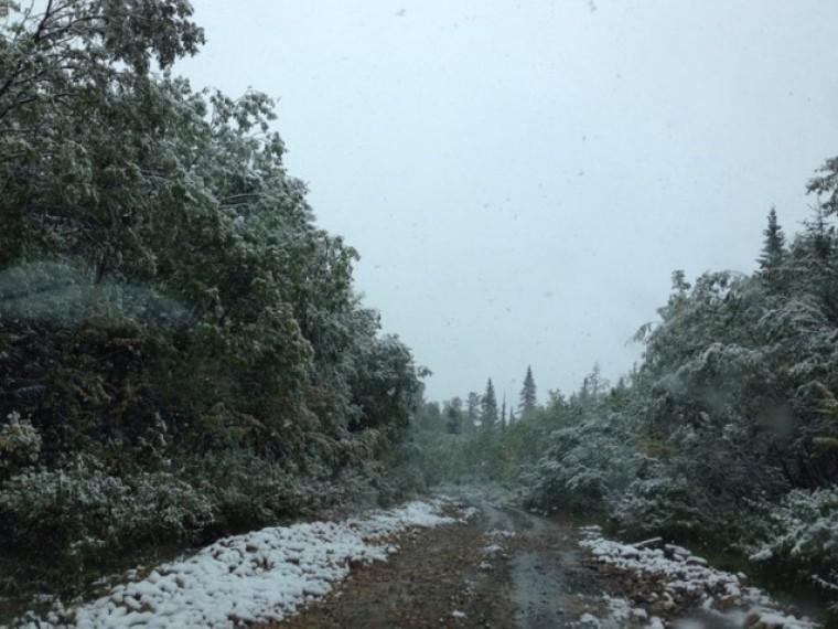 ВСвердловской области выпал снег