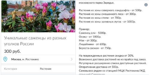На Avito выставили украденные в парке «Зарядье» растения