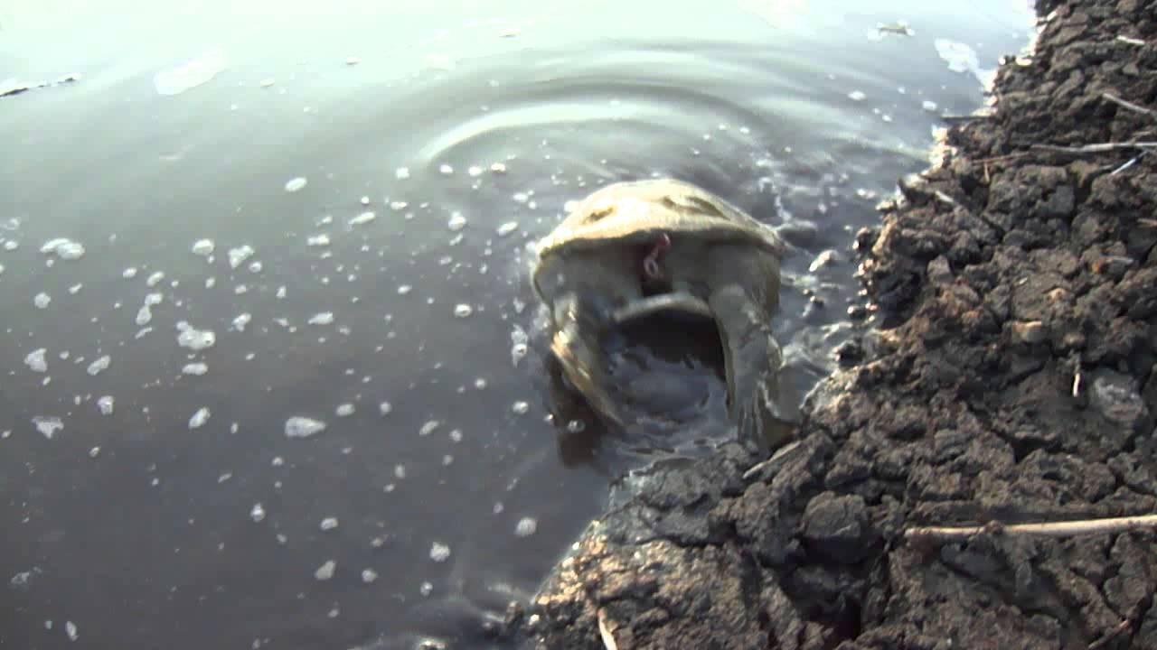ИзМосквы-реки выловили две тысячи кубов мусора иживую черепаху
