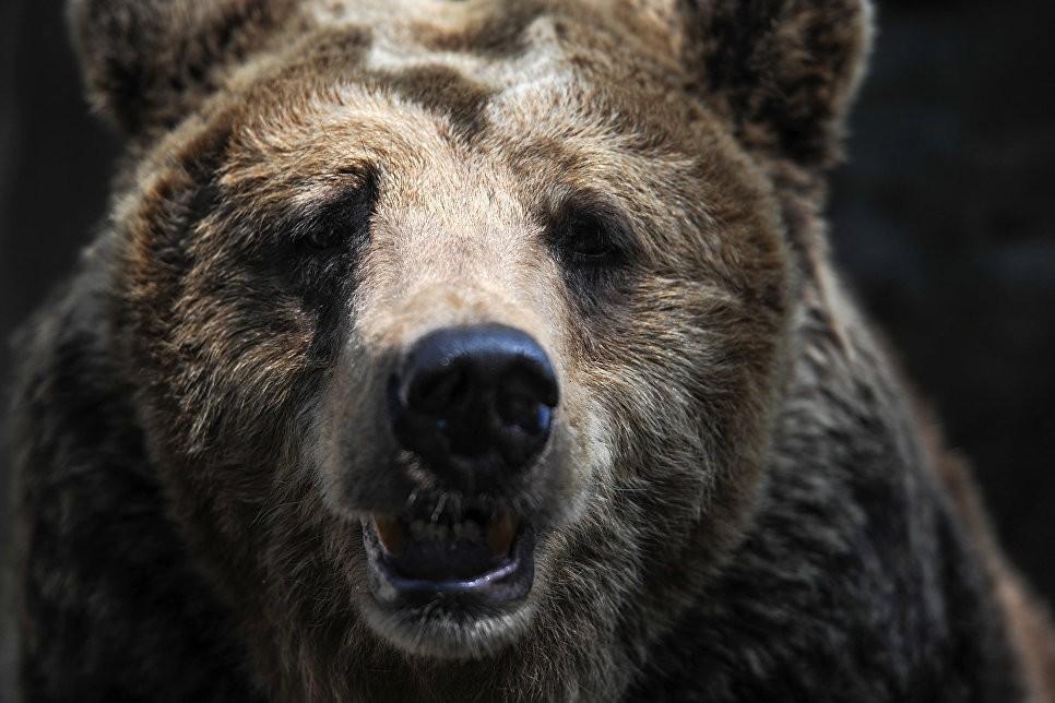 Медведь загрыз шестилетнего ребенка наТаймыре