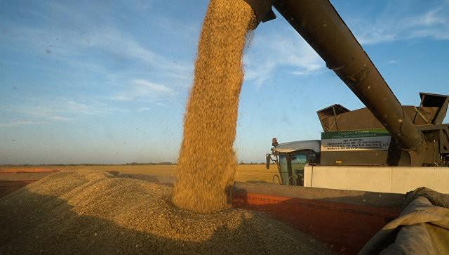 Путин спрогнозировал рекордный урожай в этом году