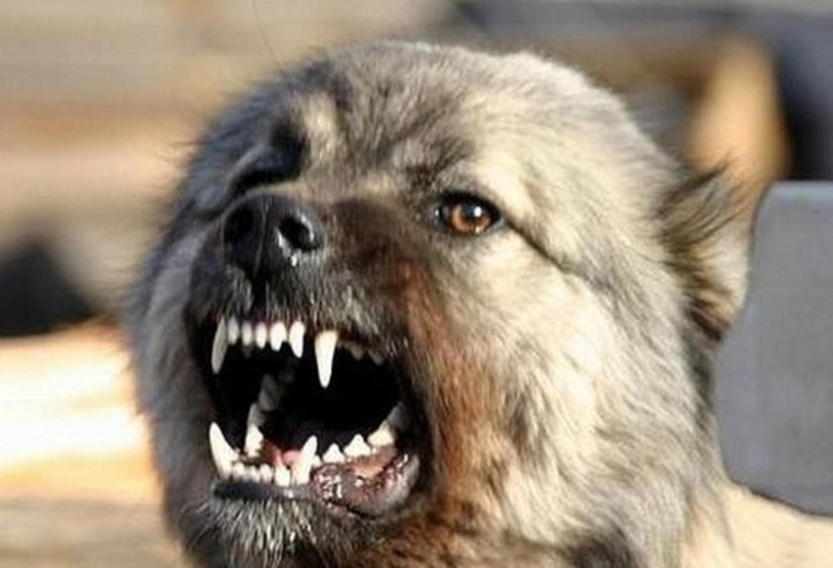Собачка загрызла своего владельца в столицеРФ
