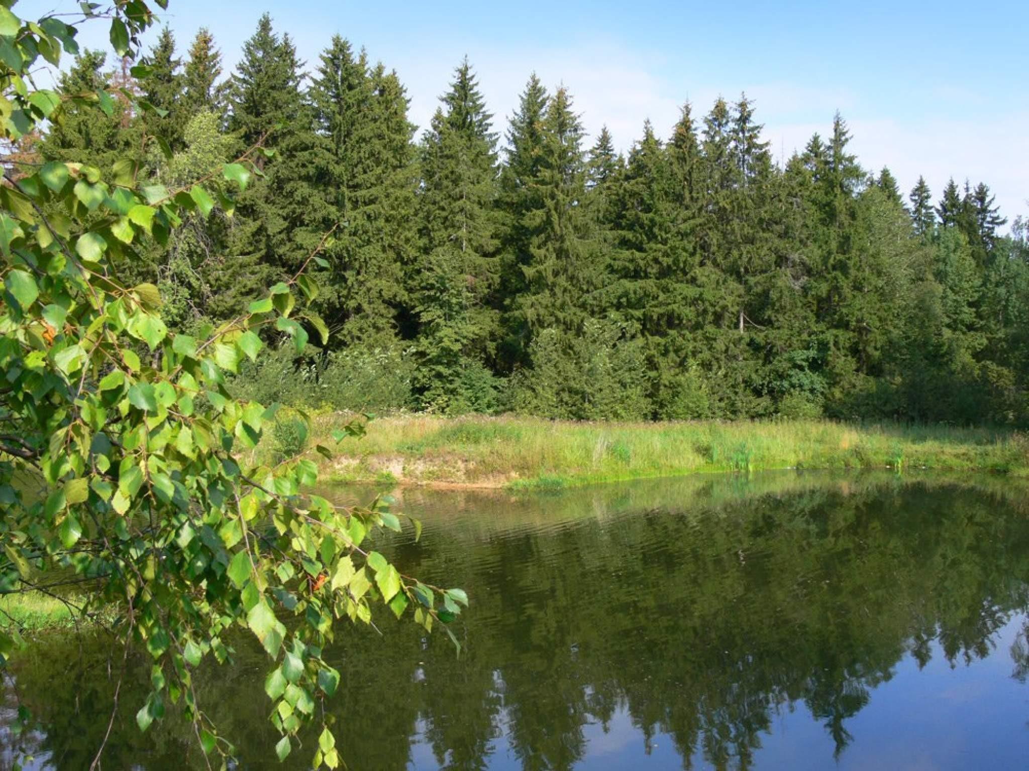 ВПодмосковье открыли шесть новых заповедных территорий— МинэкологииРФ
