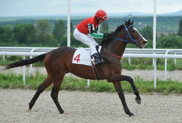 Скакун Кадырова Инстар принес 250 тысяч рублей за победу на скачках