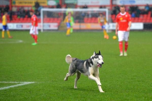 В Аргентине остановили футбольный матч из-за выбежавшей на поле собаки