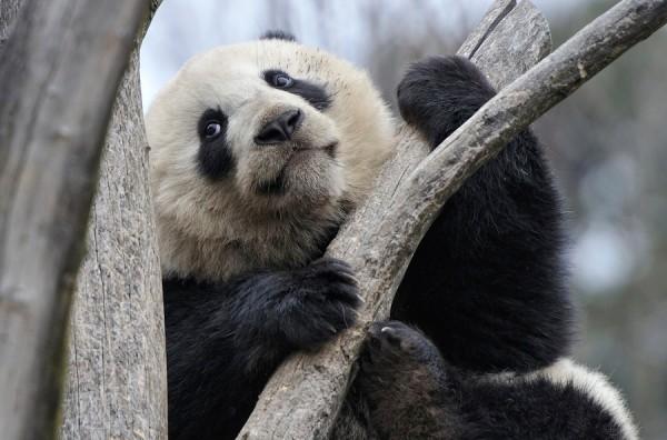 Ученые: Вымирание животных зависит от их размеров
