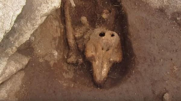Ученых озадачила могила с нечеловеческими останками