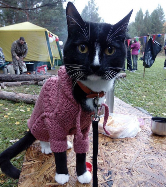 На шоу к Шнурову пришел кот-экстремал с «шизонутым» хозяином