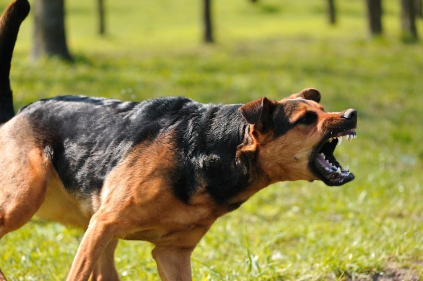 Хозяек своры нападавших надетей собак отдадут под суд вПетербурге