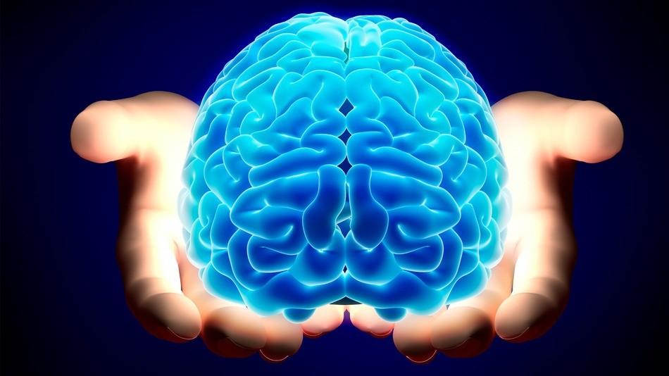 Ученые: Мозг человека покрылся извилинами из-за генных мутаций