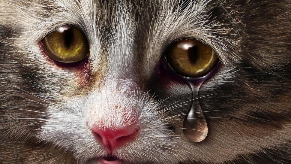 Милиция  начала проверку видео избиения кота жительницей столицы