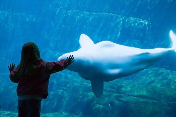 В Казахстане из отельного аквариума мужчина практически украл белугу