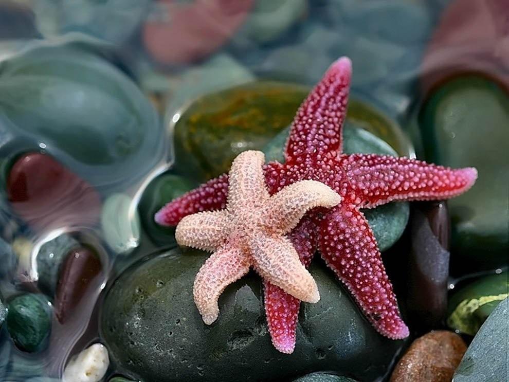 Сотни морских звезд выбросило наберегу Охотского моря