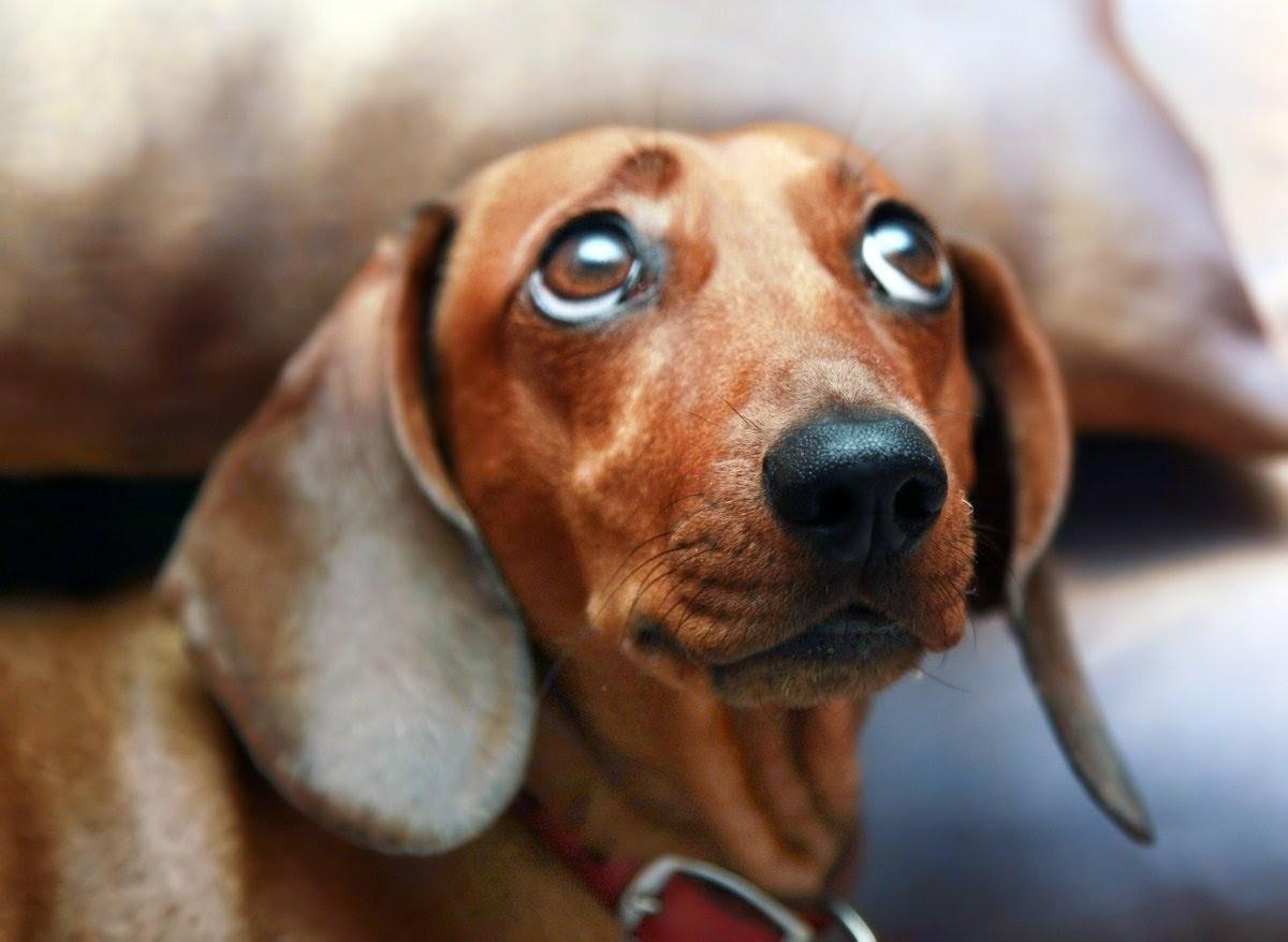 Гражданин  Гайвы задушил свою собаку ивыкинул тело сбалкона