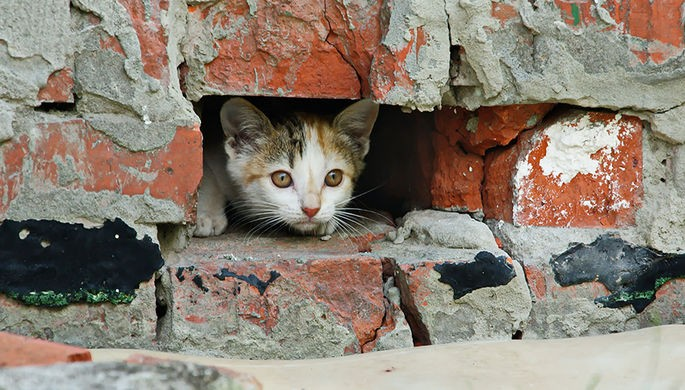 Котенка, упавшего напути, спасли вмосковском метро