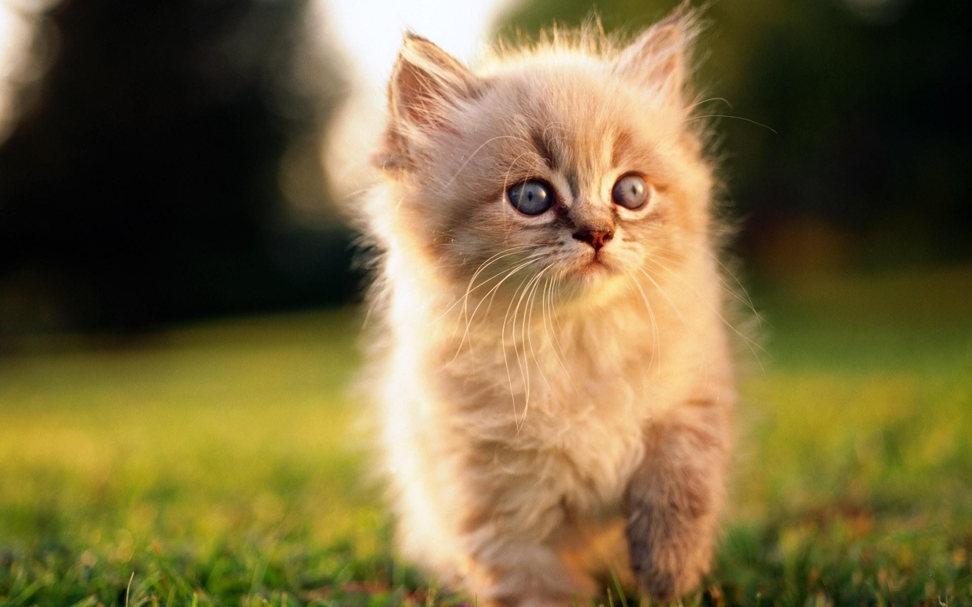 Избившей котенка москвичке устроили самосуд