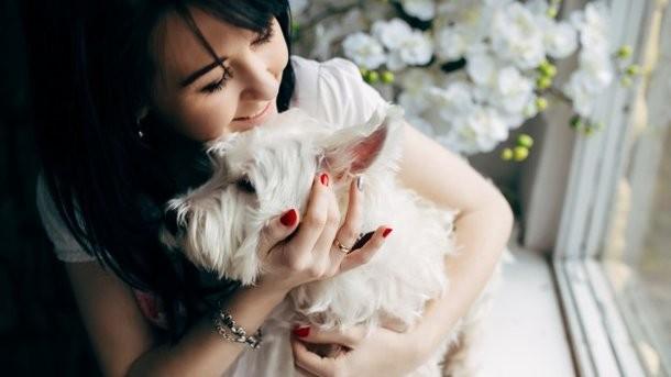 Собачка понижает риск сердечных приступов и иных смертельных заболеваний