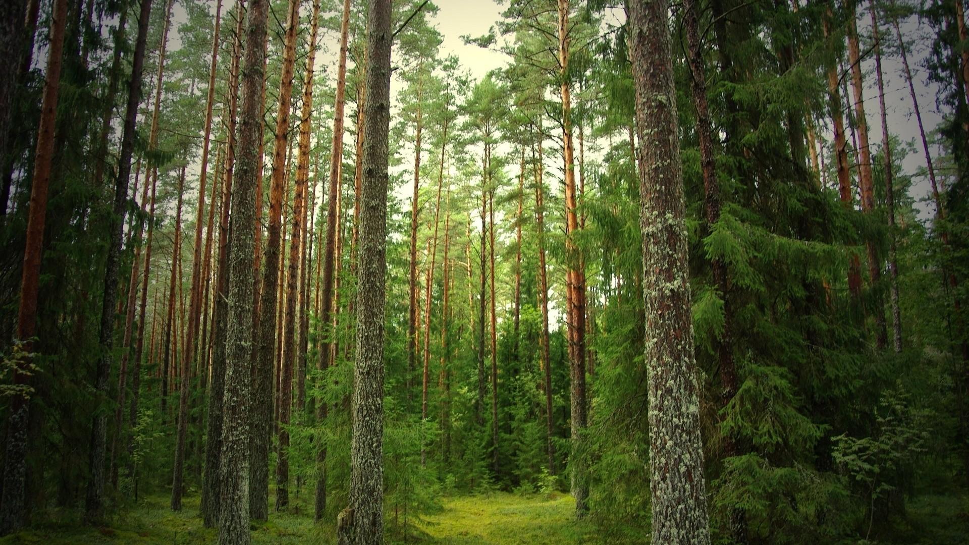 Зауральский депутат стал фигурантом уголовного дела онезаконной вырубке деревьев