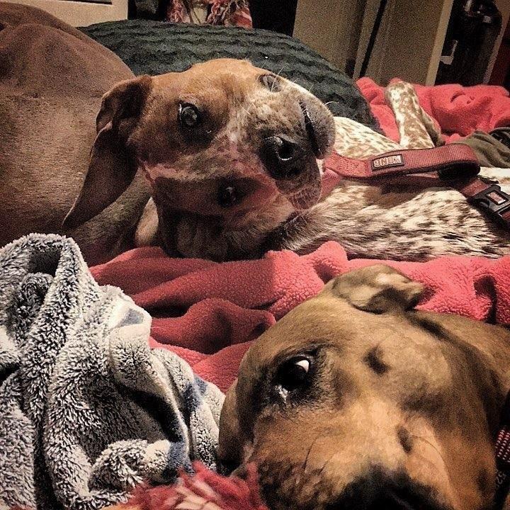 Оптическая иллюзия заставила интернет часами разглядывать изуродованную собаку