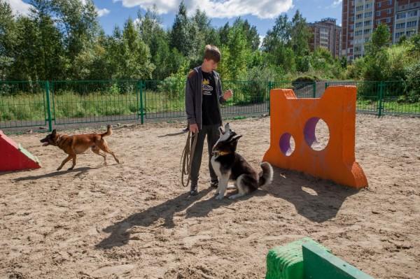 В Ростове-на-Дону открыли вторую площадку для выгула собак
