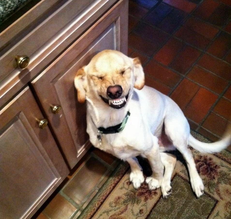 Ученые узнали, как управлять собаками спомощью улыбки