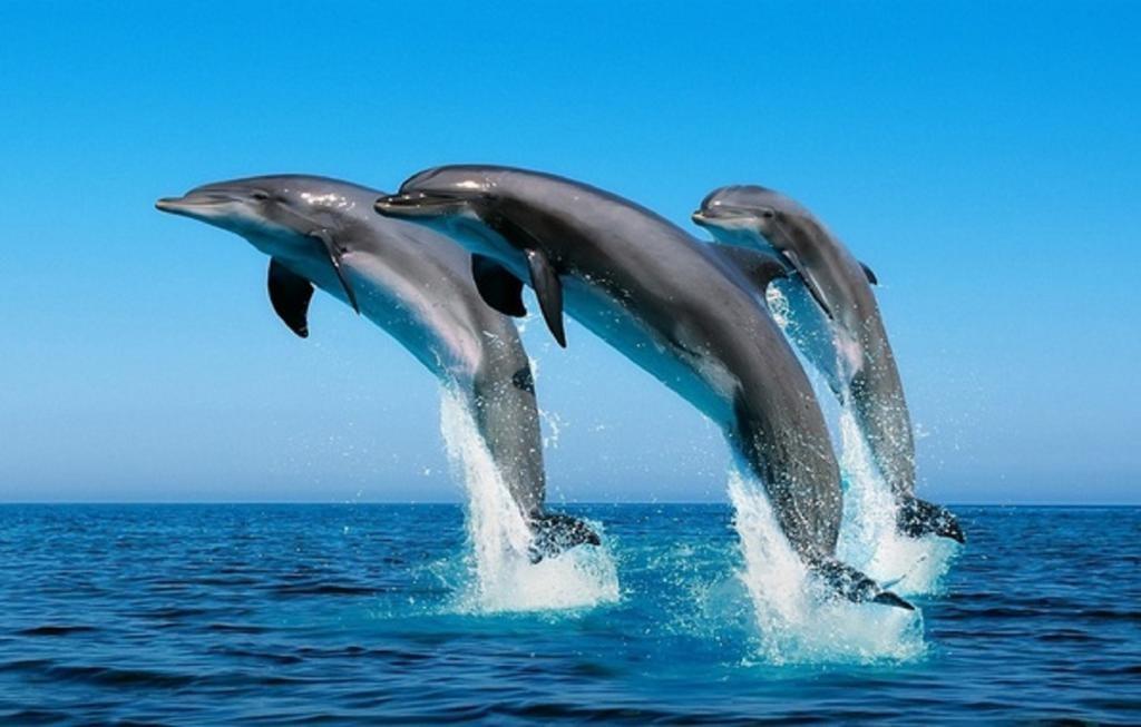 Звуки дельфинов без музыки скачать